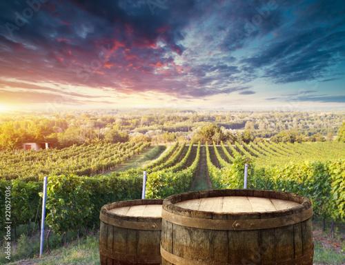 Fototapeta winnica   winnica-z-dojrzalymi-winogronami-na-wsi-o-zachodzie-slonca