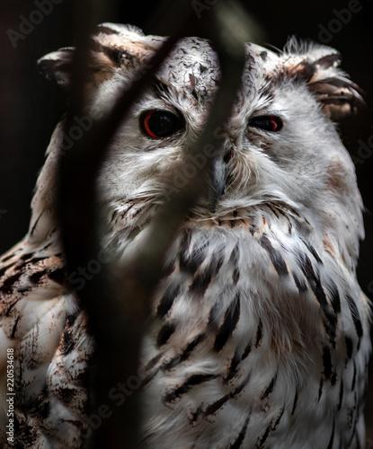Photo sur Toile Croquis dessinés à la main des animaux Eurasian Eagle Owl