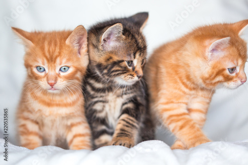 Photo  Trio de chatons