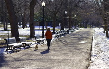 By A Beautiful Sunny Morning, Snow Is Melting In A Public Park In Montreal. A Woman Walks In The Park With Her Dog.