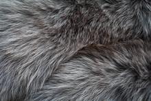 Gray Long Fur