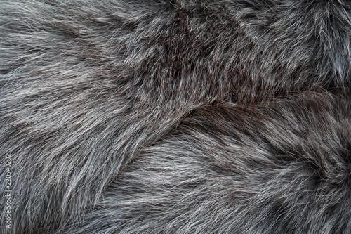 gray long fur Fototapete