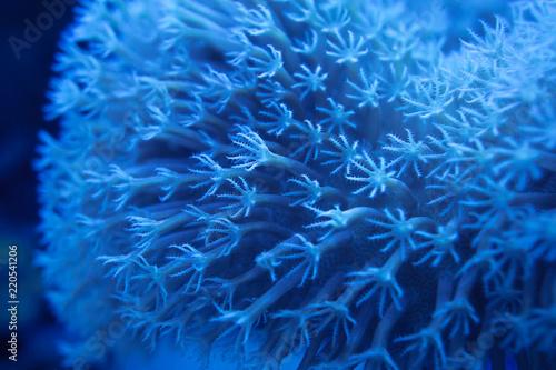 Photo  blur light blue round polyps corals at night background