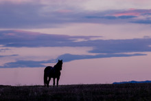 Wild Horse Silhouetted At Sunrise