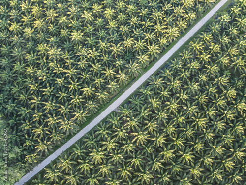 Aerial view of palm tree field in a southern part of Thailand, agricultural area Canvas Print