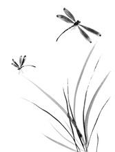 Dragonfly And Grass. Watercolo...