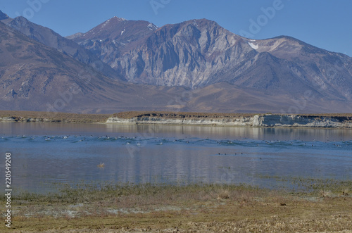 Photo  wild birds and mountain views on the eastern shore of Lake Crowley Mono county,