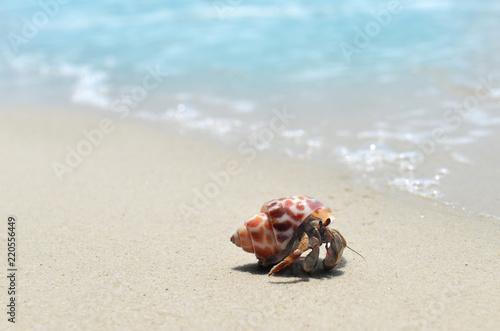 Fotografia Hermit crab walking on the beach.