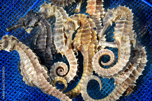 Photo Stands Textures body and texture of dry seahorse