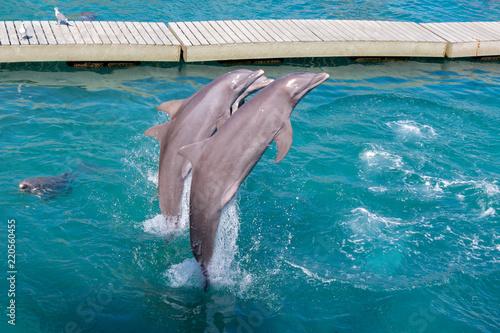 Delfines en acrobacia