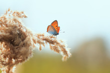 Bright Orange Butterfly Sits On A Summer Field With A Grass Feather Grass On A Background Of A Bright Sunset And A Blue Sky