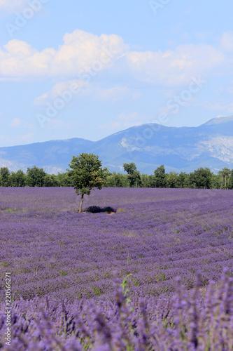Tuinposter Purper Lavendelfeld in der Provence