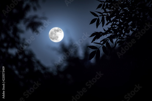 Photo Night landscape of sky and super moon with bright moonlight behind silhouette of tree branch