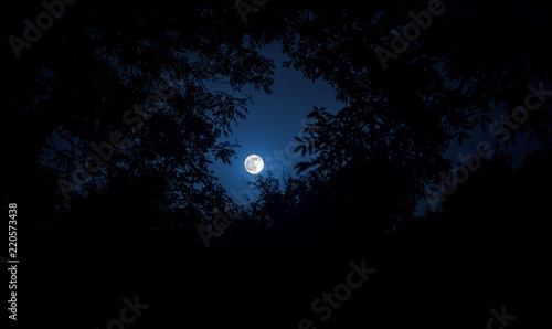Fotografiet Night landscape of sky and super moon with bright moonlight behind silhouette of tree branch
