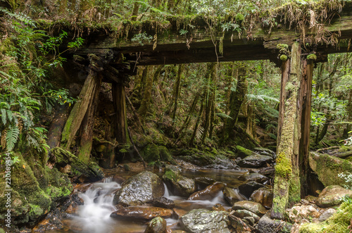 Fotografie, Obraz  Part of the abandoned, North East Dundas Tramway along the Montezuma Falls Track, Tasmania, Australia