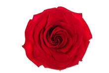 Beautiful Red Rose Isolated On...