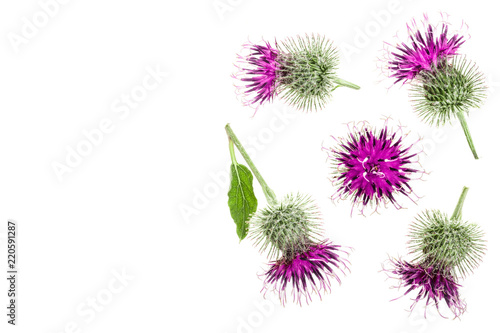 Burdock flower isolated on white background with copy space for your text Wallpaper Mural