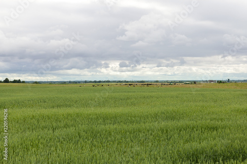 Foto  agricultural field