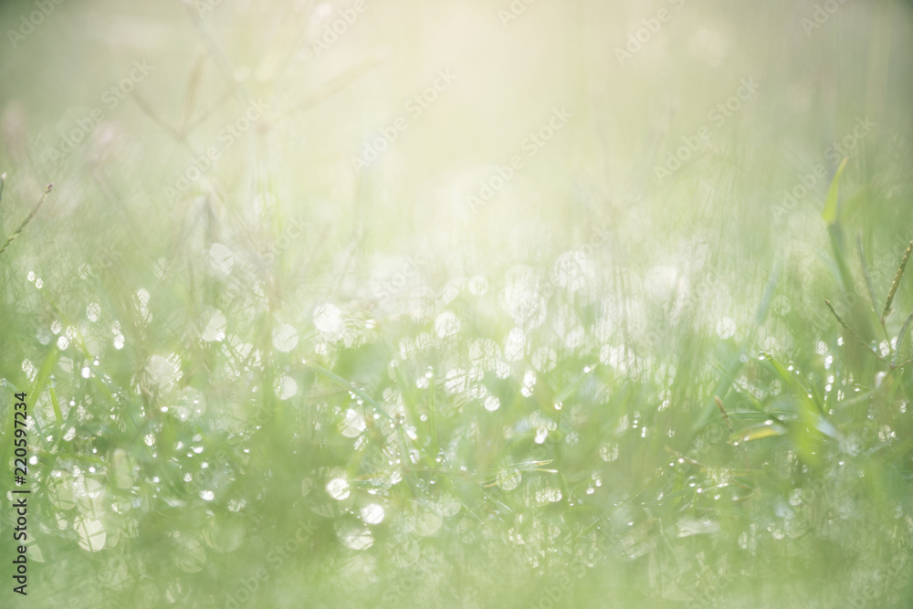 Fototapety, obrazy: Green grass with dew background with sunlight