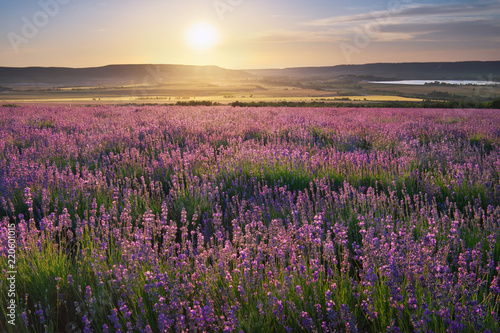 Fototapeta Meadow of lavender at sunset. obraz na płótnie