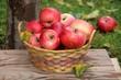 bio äpfel im obstgarten
