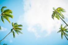 Palm Trees And Blue Sky. Low Angle.