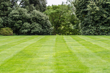 Background: Freshly Cut English Lawn With A Bush At Background.