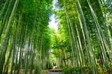 Fototapeta Bambus - 静岡県伊豆市 修善寺の「竹林の小径」