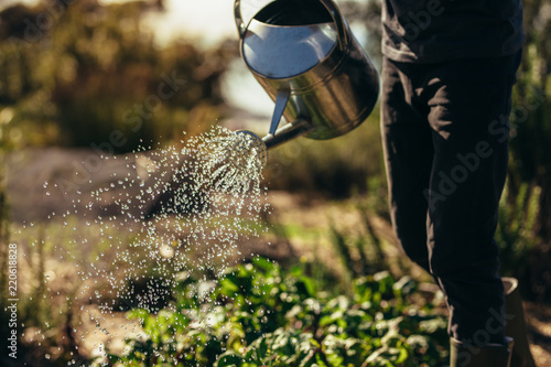 Man waters vegetables with sprinkling can on farm Fototapeta