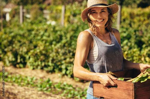 Fototapeta Friendly woman harvesting fresh vegetables from farm obraz