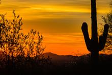 Close Ups Of Various Cactus Fo...