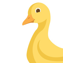Duckling Head  Vector Illustra...