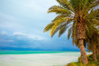 Dead Sea shore. Palm trees on the beach. Ein Bokek, Israel