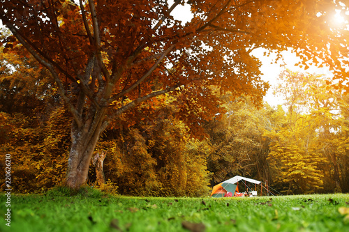Fototapety, obrazy: nature landscape camping tent with tarp or flysheet under big yellow red tree on green grass meadow in jungle for family vacation picnic on autumn season and holiday relax travel with warm sunlight