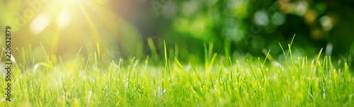 Poster de jardin Herbe Fresh green grass background in sunny summer day in park