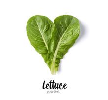 Fresh Green Lettuce Leaves Iso...