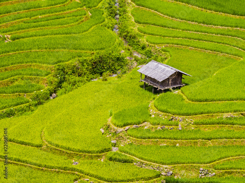 Tuinposter Rijstvelden Typical farm hut surrounded by green terraced rice field, Mu Cang Chai, Yen Bai Province, northern Vietnam