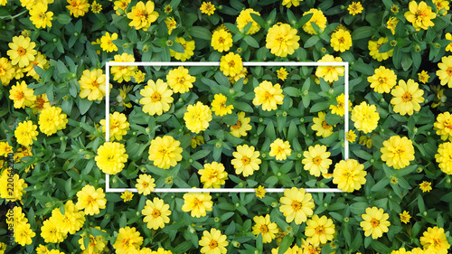 Deurstickers Narcis Creative white frame layout Space made of leaf and Yellow flowers. Flat lay.