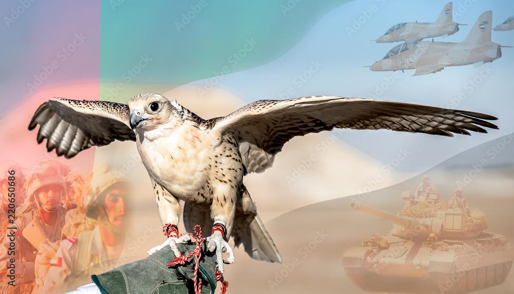 Photo  Falcon Training in Gulf area, Abu Dhabi, UAE.