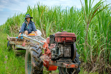Asian Thai Farmer Woman Driving Car On Rice And Corn Field