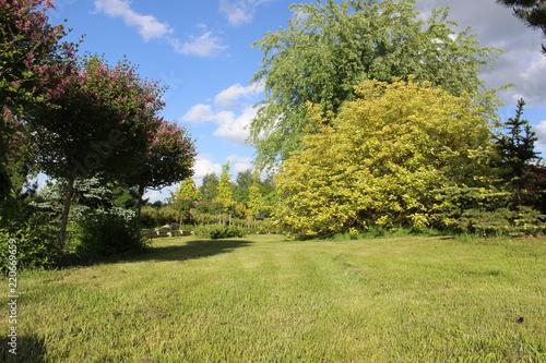 Foto op Canvas Pistache branch garden grass spring sky tree green plant sunny flower forest