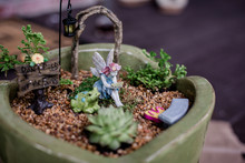 Fairy Garden Planting.