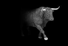 Taurus Wildlife Animal Interio...