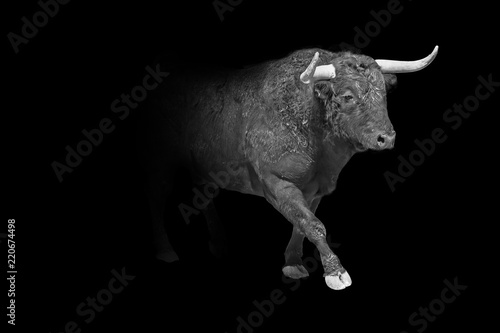 Foto op Aluminium Buffel taurus wildlife animal interior art collection