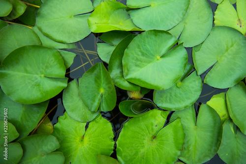 Foto op Aluminium Lotusbloem Top view of lotus leaf