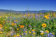 African Spring Flowers