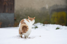 Kot Oddający Ekskrementy
