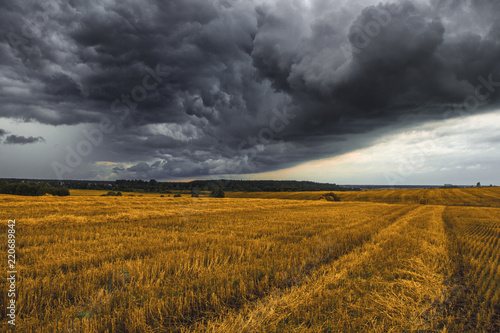 Poster Miel Yellow wheat fields after harvest. In the fields of haystacks, in the sky, heavy grey clouds. 5 minutes before the storm.
