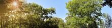 Panorama Mit Baumkronen Und Sonne Im Sommer