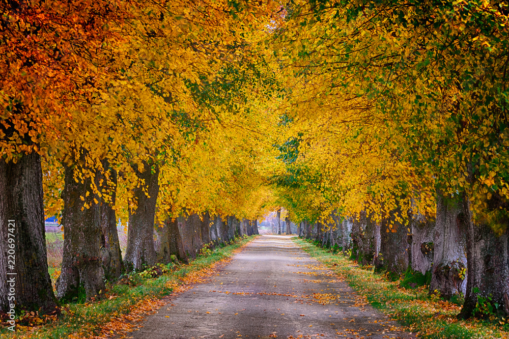 Fototapety, obrazy: Countryside road among the trees in autumn. Masuria, Poland. Analog style.